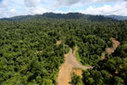 Next big idea in forest conservation? Global road map to mitigate damage from roads | The Glory of the Garden | Scoop.it