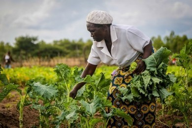 Organic farming breaks new ground in Zimbabwe | UNDP | tradefarmer | Scoop.it