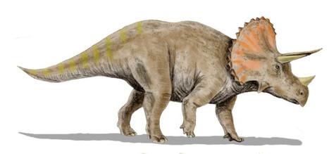 Un étrange cousin du Triceratops découvert   Aux origines   Scoop.it