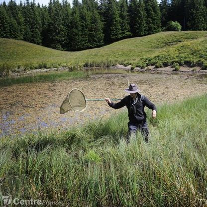 Sur la piste des libellules du Massif Central | Montagne - Environnement - Biodiversité - Climat | Scoop.it