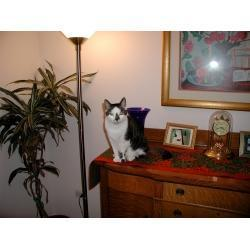 Cat Gifts For Men | Christmas Cat Ornaments and Cards | Scoop.it