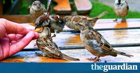 Feeding sparrows on Holy Island: an ethical dilemma | Wenlock Edge | Scoop.it