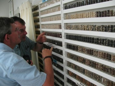 A glass vial of beans is worth a thousand database entries | Agricultural Biodiversity | Scoop.it