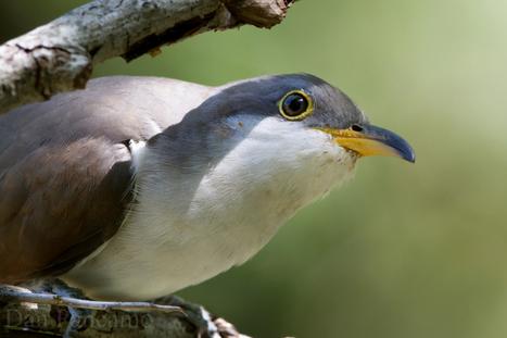 Applaud Protection of Threatened Bird Species | GarryRogers NatCon News | Scoop.it