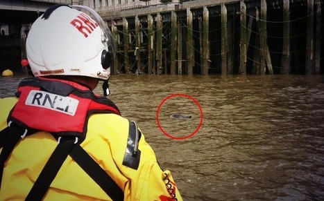 Five porpoises spotted in River Thames - Telegraph | Marine Science and Conservation | Scoop.it