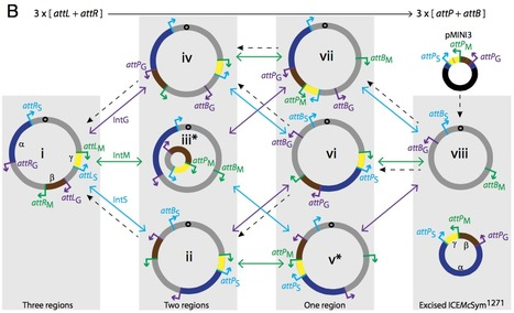 Assembly and transfer of tripartite integrative and conjugative genetic elements | Interaction, and more... | Scoop.it