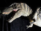 Dinosaur farts may have caused global warming | In Today's News of the Weird | Scoop.it