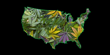 These States Are Most Likely To Legalize Weed Next. Will You Have A Happier 4/20 In 2015? | Black People News | Scoop.it