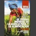 Presentado el Informe sobre el estado mundial de la agricultura y la alimentación, SOFA 2016 | Nuevas Geografías | Scoop.it
