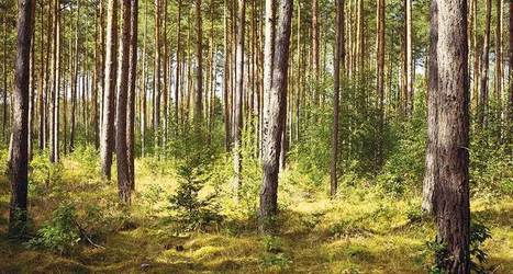 Forest management not so hot at fighting warming | GarryRogers Biosphere News | Scoop.it