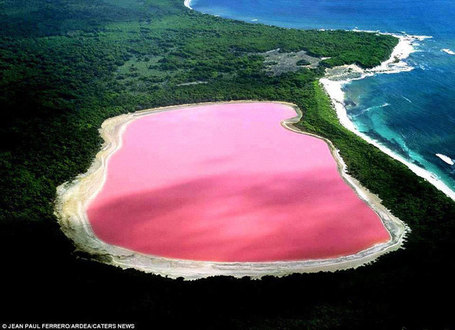 Lake Hillier: The Pink lake in Australia | Amazing Science | Scoop.it