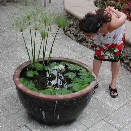 How To Make a Container Water Garden | Gardening Inspiration and Information | Scoop.it