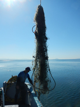 West Coast Region: Marine Debris Removal | Farming, Forests, Water & Fishing (No Petroleum Added) | Scoop.it