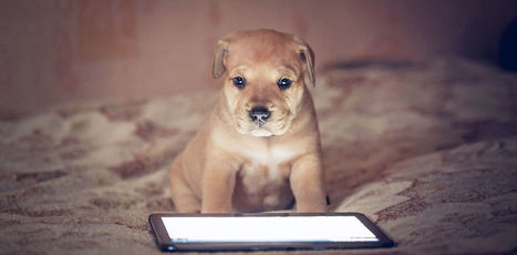 Touchscreens for dogs, wearables for chickens: welcome to the world of animal technology | Knowmads, Infocology of the future | Scoop.it