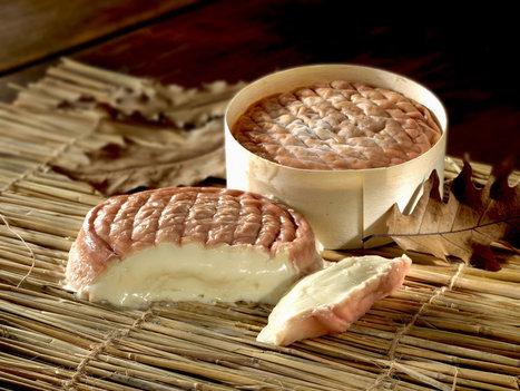 L'époisses, le roi des fromages | thevoiceofcheese | Scoop.it