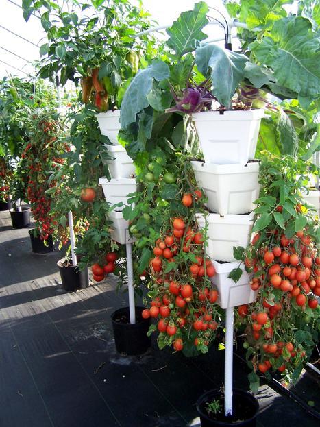 39 vertical farming 39 in cultivos hidrop nicos for Cultivos verticales definicion
