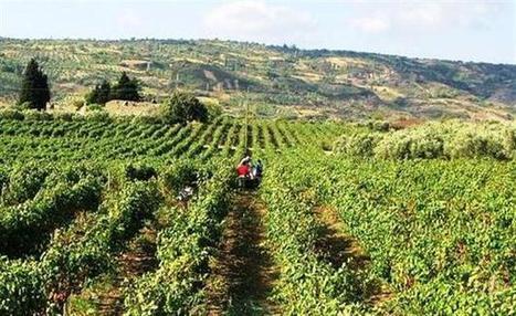 Turkey's 'wine dream has been halted' | Autour du vin | Scoop.it