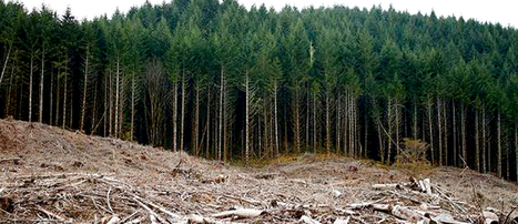 Federal Court Strikes Down EPA's Biomass Pollution Loophole | EcoWatch | Scoop.it