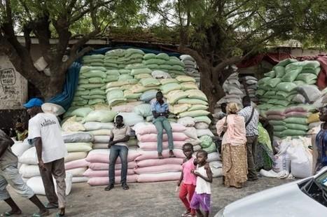 Au Sénégal,  le Big Data est un outil précieux pour le développement | Recherche scientifique | Scoop.it