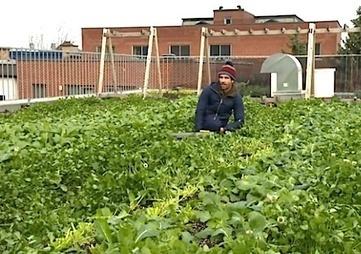 Urban Agriculturalists win Canadian World ... - City Farmer News | Circuits courts et société | Scoop.it