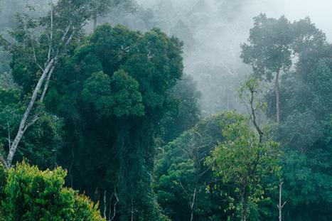 ContreInfo :: La forêt tropicale disparaît à une vitesse alarmante | The Blog's Revue by OlivierSC | Scoop.it
