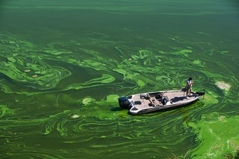Pictures: Extreme Algae Blooms Expanding Worldwide | Sustain Our Earth | Scoop.it