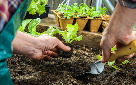 How to choose the right potting compost for your plants | Gardening | Scoop.it