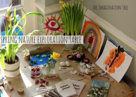 Nature Exploration Table - The Imagination Tree | Primary Geography for the Australian Curriculum | Scoop.it