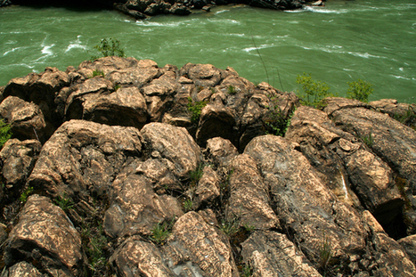 Stromatolites a window into Earth's history - Bonners Ferry Herald | prehistoric plants | Scoop.it