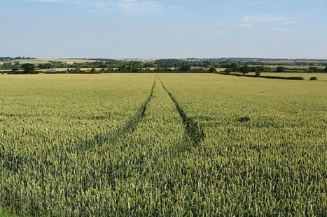 Le manque de diversité des semences pénalise la sécurité alimentaire | Questions de développement ... | Scoop.it