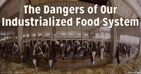US - Rash of Foodborne Outbreaks Highlight Dangers of Industrialized Food System | Health - Mining Contamination | Scoop.it