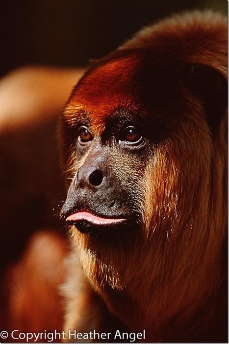 8 Common Wildlife Photography Mistakes   Photography Tips & Tutorials   Scoop.it