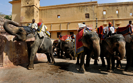 India considers banning elephant rides   Animals R Us   Scoop.it