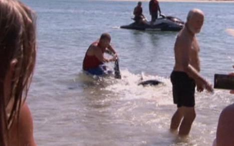 Briton wrestles shark away from children in Australia - Telegraph | Australia Wildlife | Scoop.it