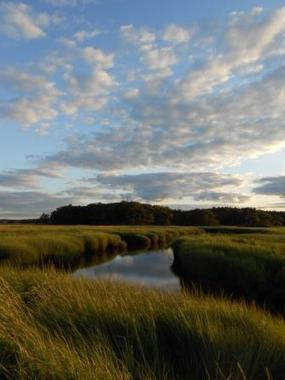 The Not-So-Mysterious Loss of Salt Marshes and Ecosystem Services   Guest Blog, Scientific American Blog Network   Sustain Our Earth   Scoop.it