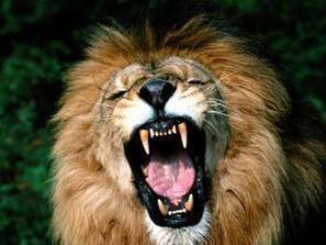 Surprise en plein ébats, elle meurt dévorée par une lionne | Mais n'importe quoi ! | Scoop.it