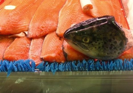 FDA Signs Off On Genetically Modified Salmon Without Labeling | Occupy Your Voice! Mulit-Media News and Net Neutrality Too | Scoop.it