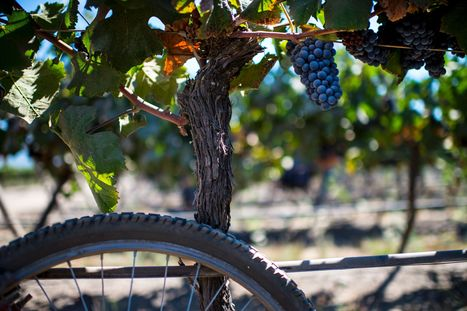Lovers of French #wine could soon have to pay steeper prices to get their favorite beverage | Vitabella Wine Daily Gossip | Scoop.it