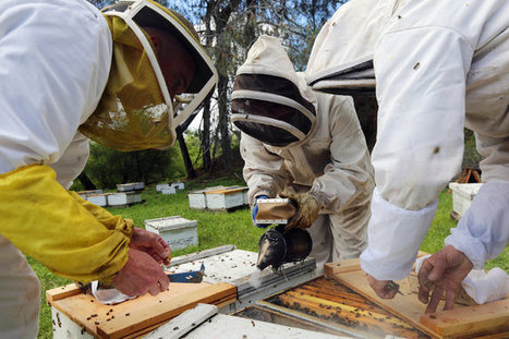 Program Looks to Give Bees a Leg (or Six) Up | Sustain Our Earth | Scoop.it