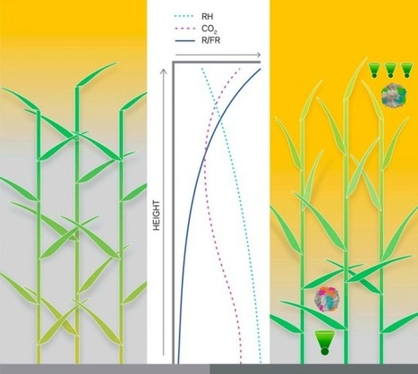 The Plan to Feed the World by Hacking Photosynthesis   News we like   Scoop.it