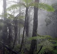 Cloud Forests Fading in the Mist, Their Treasures Little Known | Biodiversity IS Life  – #Conservation #Ecosystems #Wildlife #Rivers #Forests #Environment | Scoop.it
