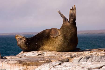 Actualité > Pour sauver les mammifères marins, protéger 4% des océans suffit | Nouveaux paradigmes | Scoop.it