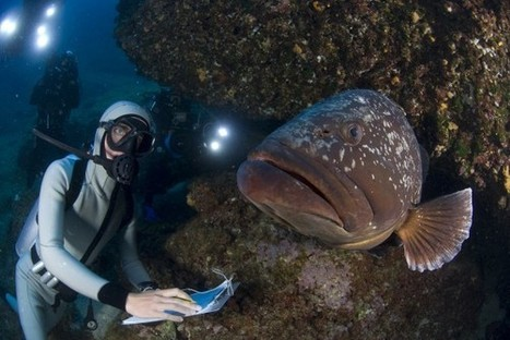 New Research: #MarineReserves Can Stoke Local Economies   Rescue our Ocean's & it's species from Man's Pollution!   Scoop.it