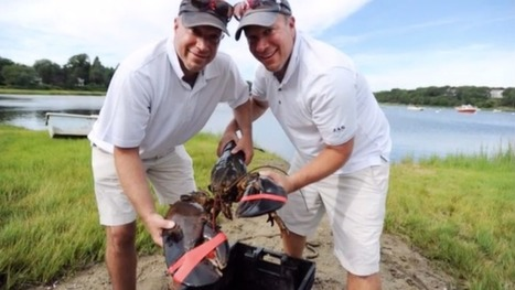 Majestic 22-Pound Lobster Dies After Being Released Into the Wild by Clueless Humans | Aquaculture Directory | Scoop.it
