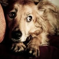 Thunderstorm Anxiety in Dogs | Pet News | Scoop.it