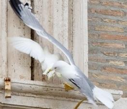 Una gaviota ataca a una paloma de la paz que el Papa soltó como apoyo a Ucrania - ANTENA 3 TV | exito | Scoop.it