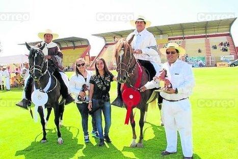 Pasión por la crianza del Caballo de Paso Peruano - Diario Correo | Caballo, Caballos | Scoop.it