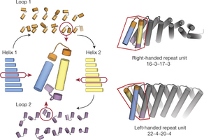 Exploring the repeat protein universe through computational protein design | Computational approaches for protein engineering and design | Scoop.it