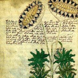Watch: Mystery Manuscript Cracked? | Linguistique - Sprachwissenschaft - Linguistics | Scoop.it