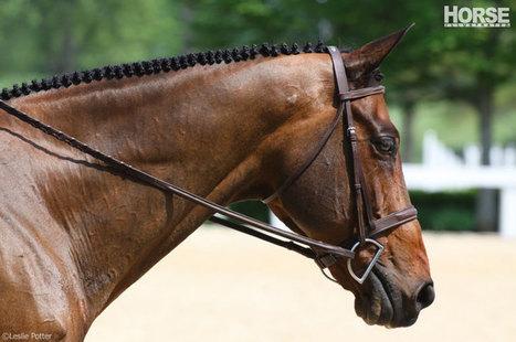 Upgrade Your Horse's Braids - HorseChannel.com | Redwood Ranch Stables | Scoop.it